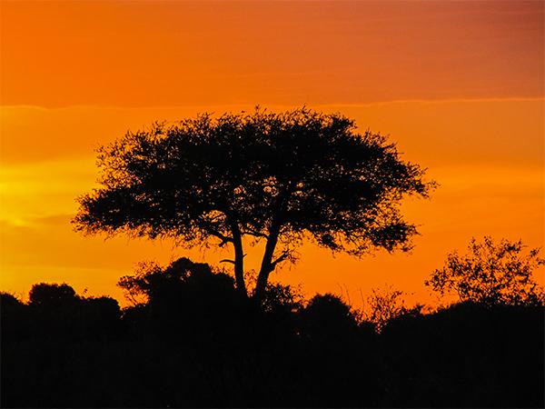 кения, закат1