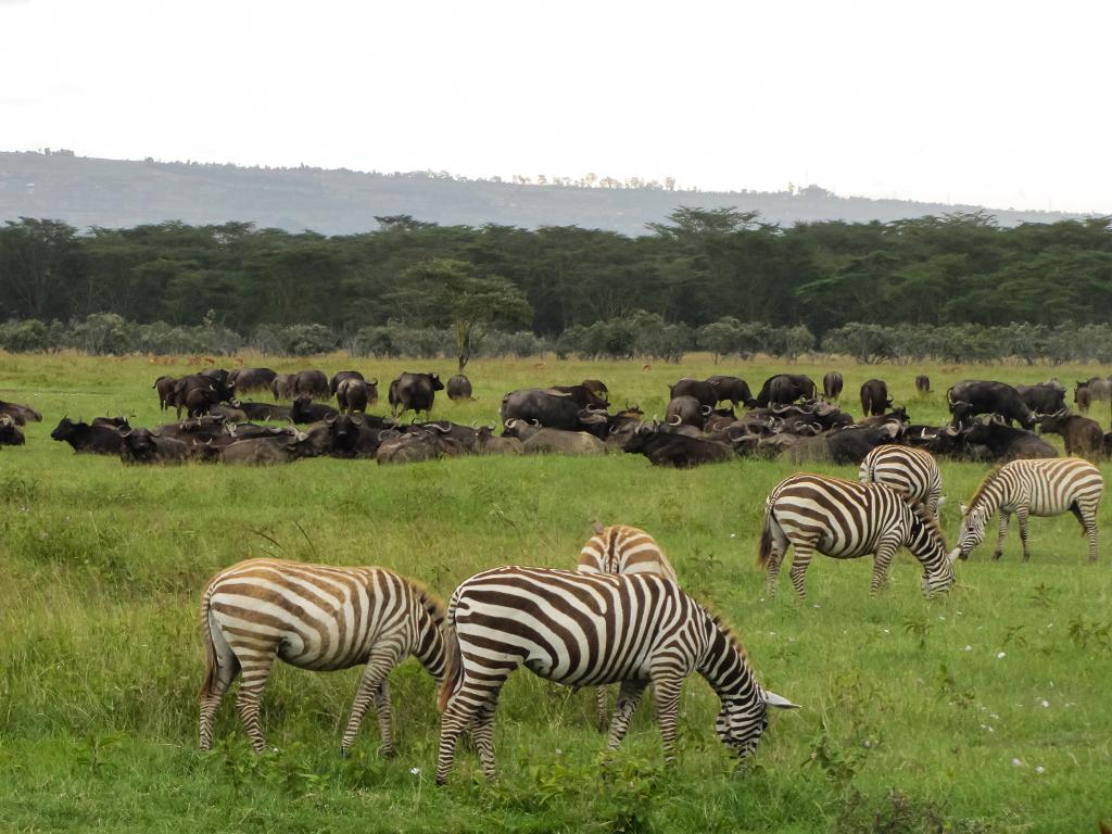 масаи-мара_