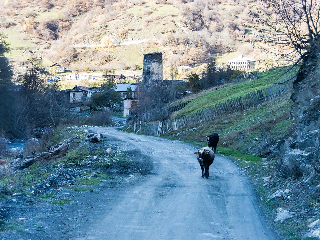 животные-грузии1