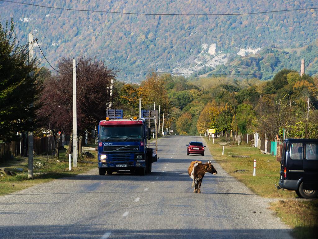 животные-грузии2
