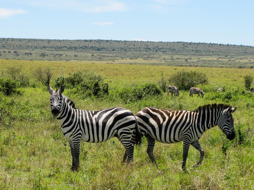 масаи-мара4