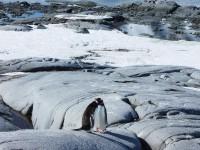 пингвины1