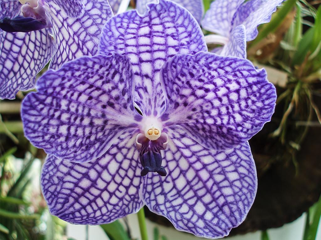 цветы-шри-ланка_1