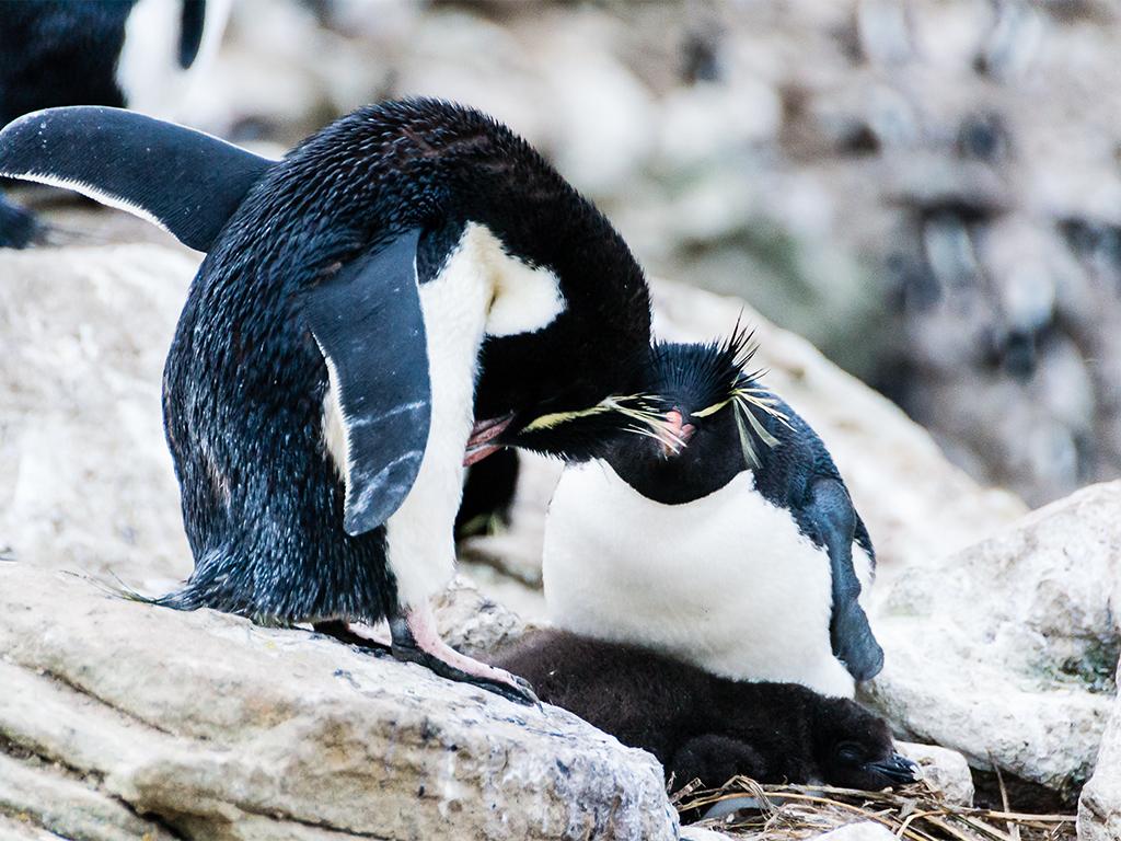 antarctica-romance2