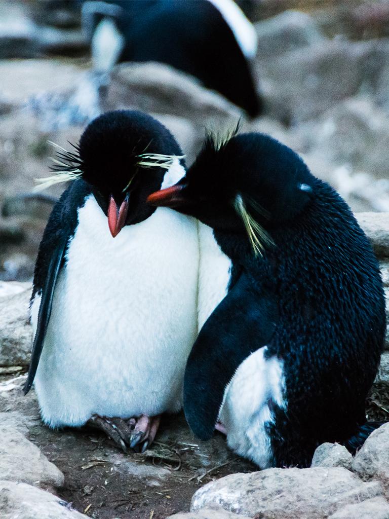antarctica-romance5