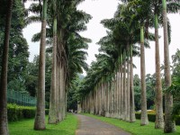 Королевский-ботанический-сад4