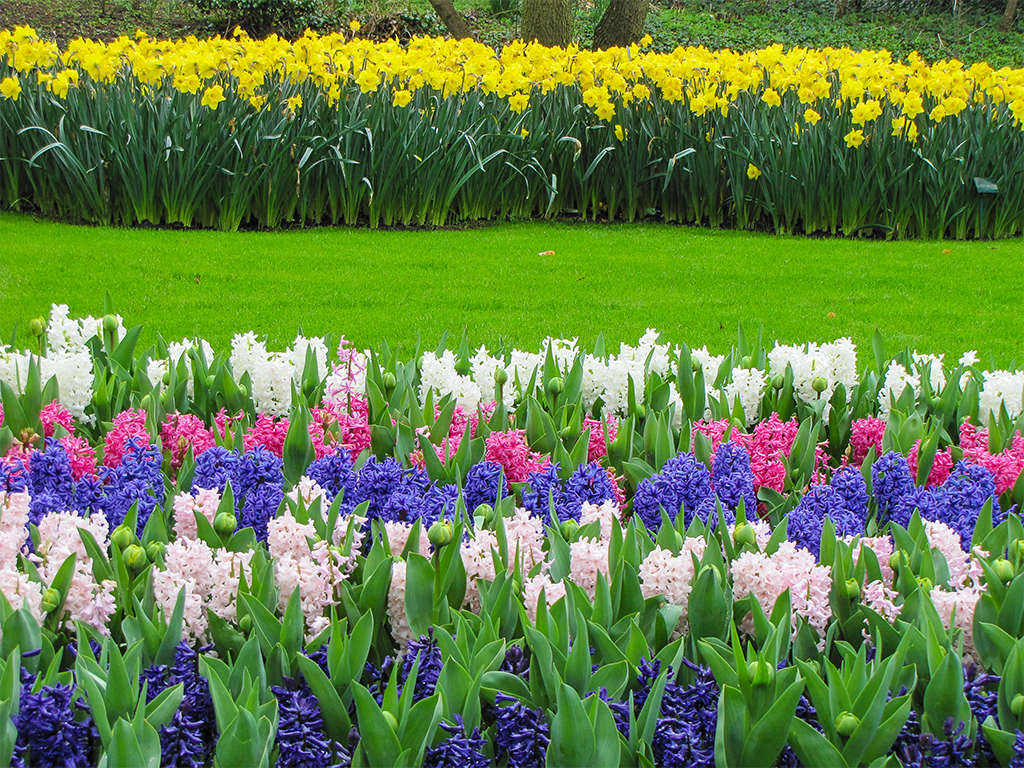 парк-цветов-нидерланды-сайт-1