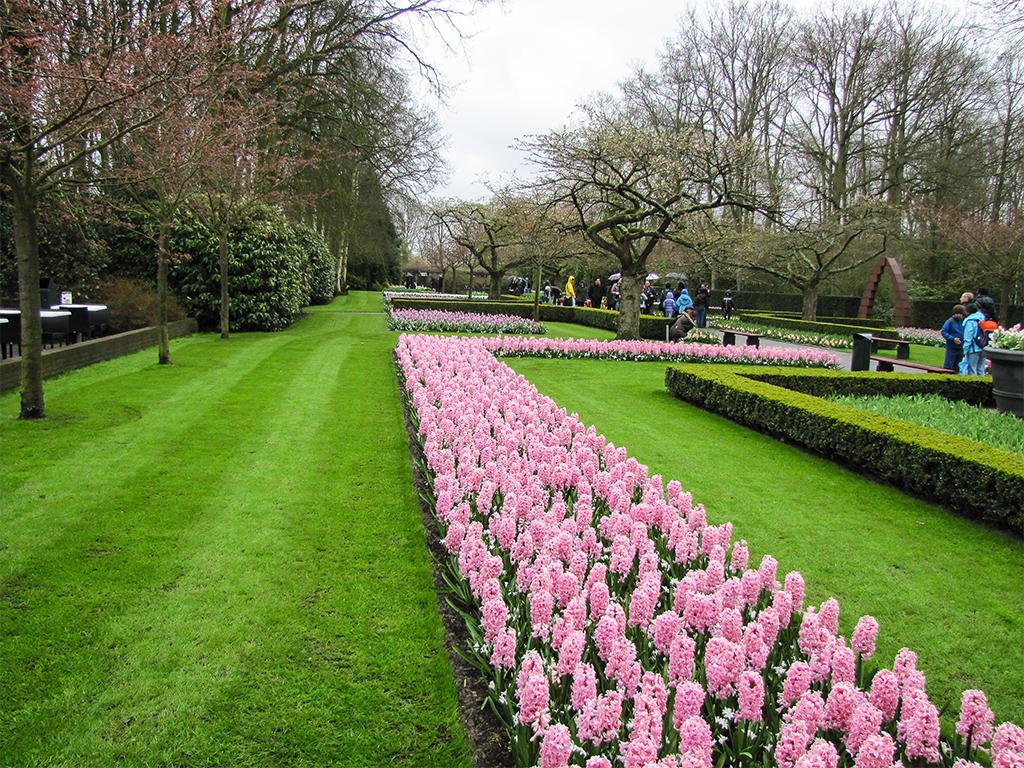парк-цветов-нидерланды-сайт-2