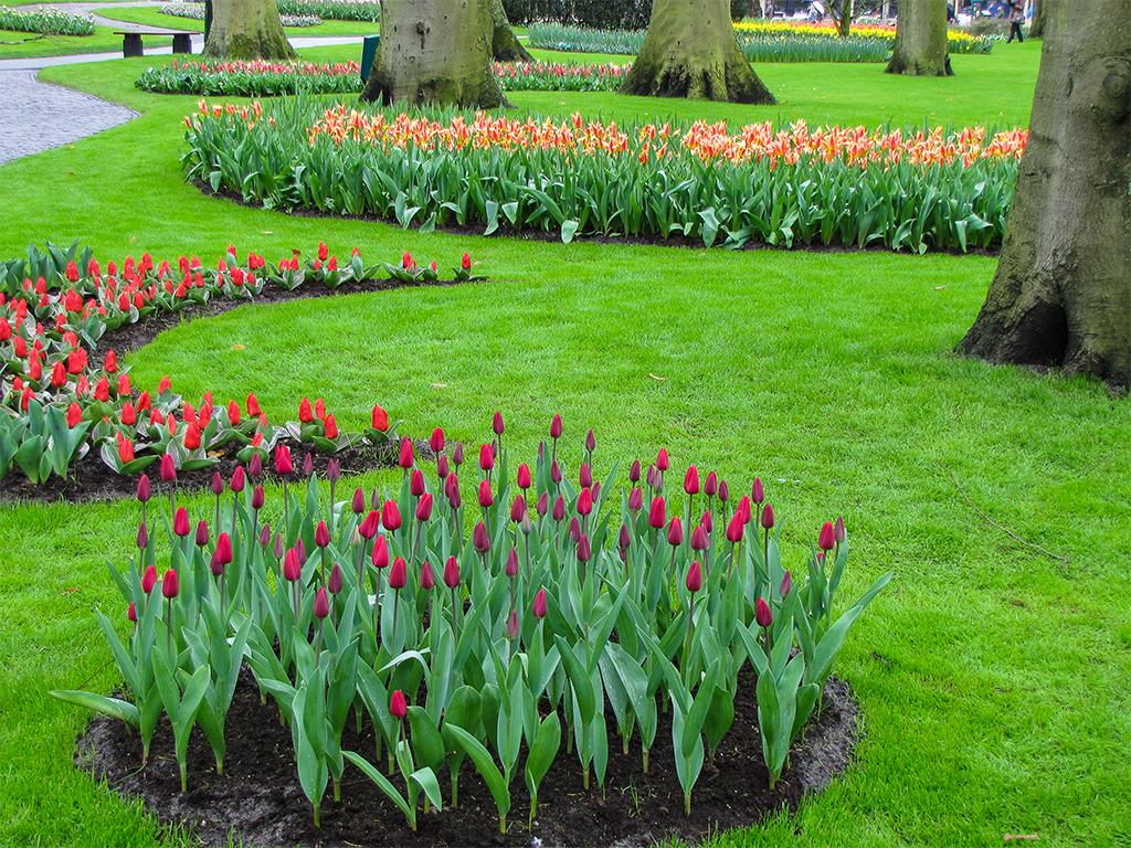 парк-цветов-нидерланды1
