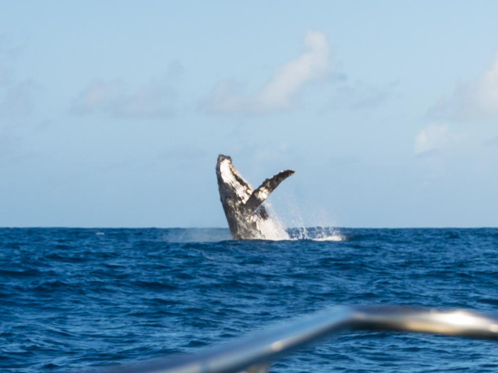 киты-2
