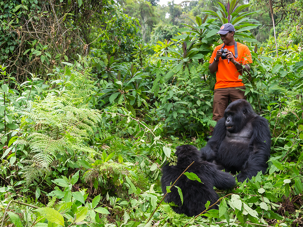 горилы-горные-руанда-2