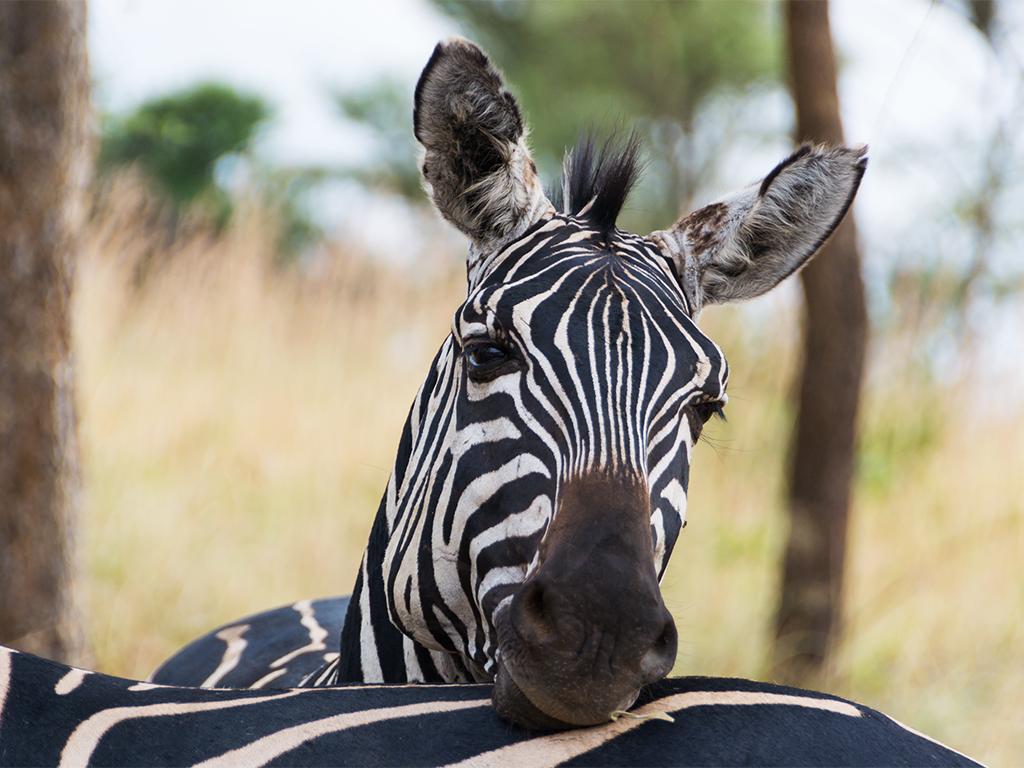 руанда-животные-1