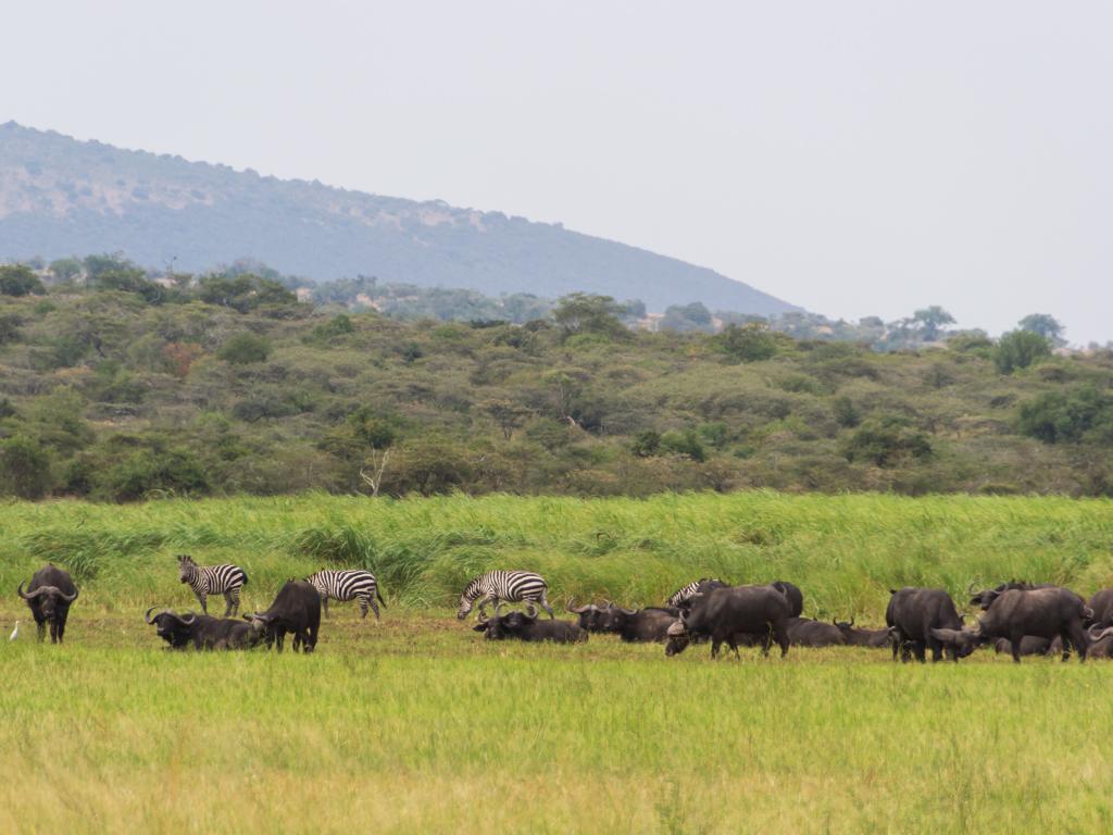 руанда-животные-2