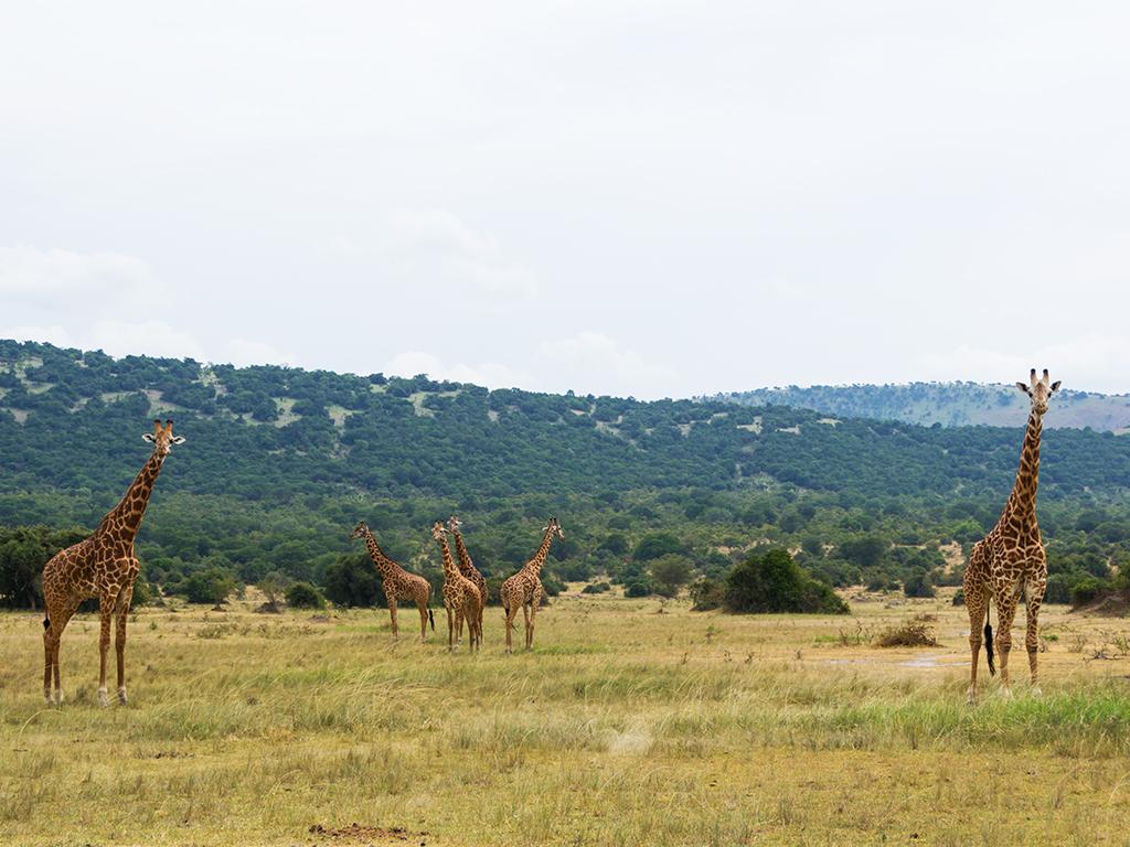 руанда-животные-3