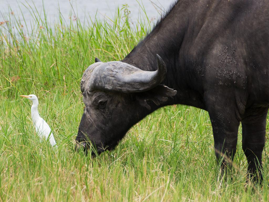 руанда-животные-4