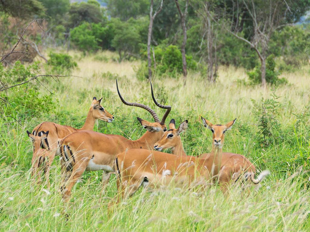 руанда-животные-5