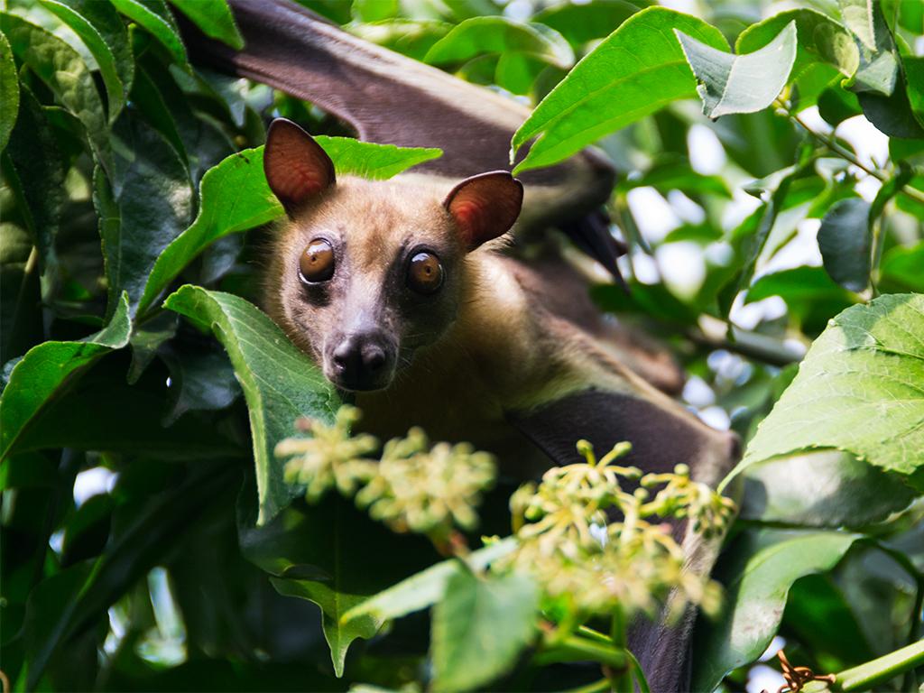 руанда-летучие-мыши-2