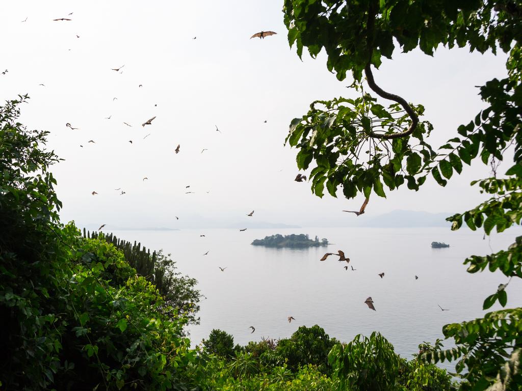 руанда-озеро-киву-3