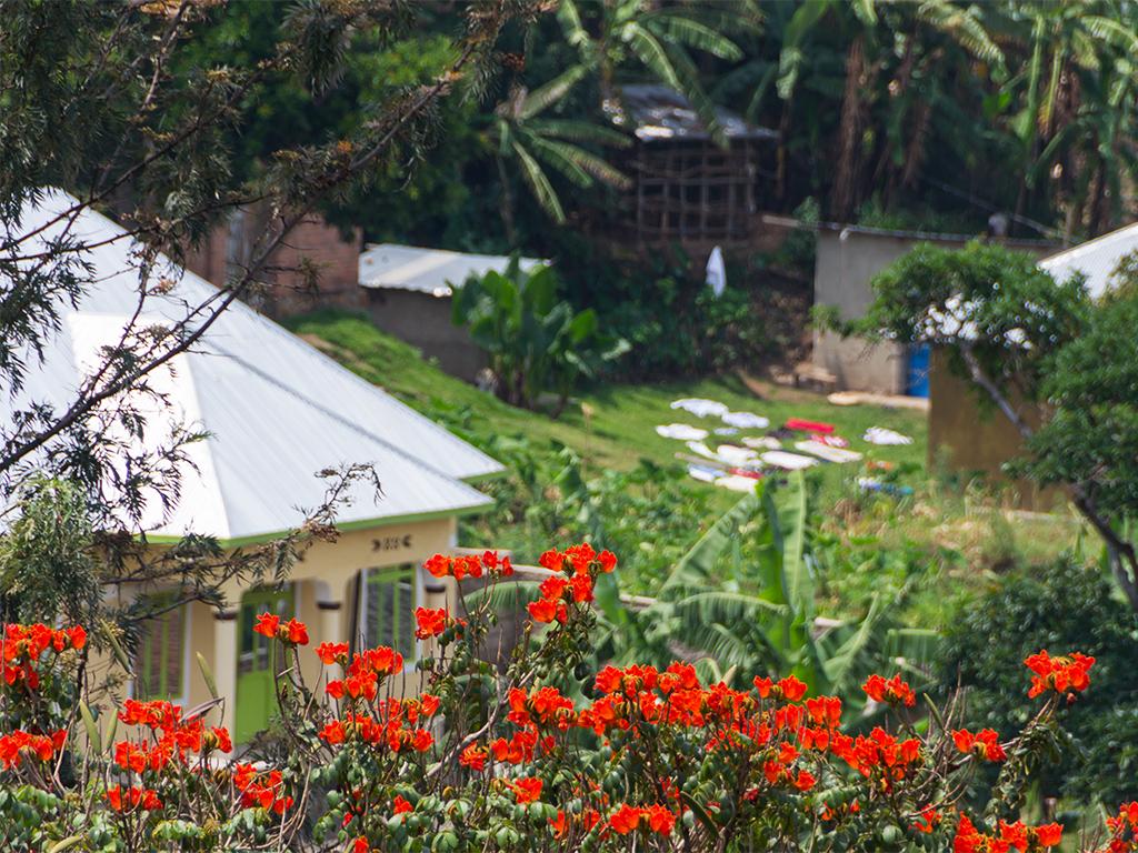 руанда-тюльпанное-дерево-2
