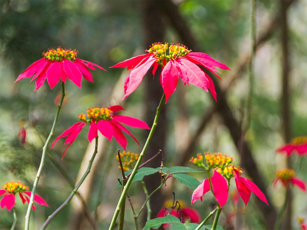 руанда-цветы-2