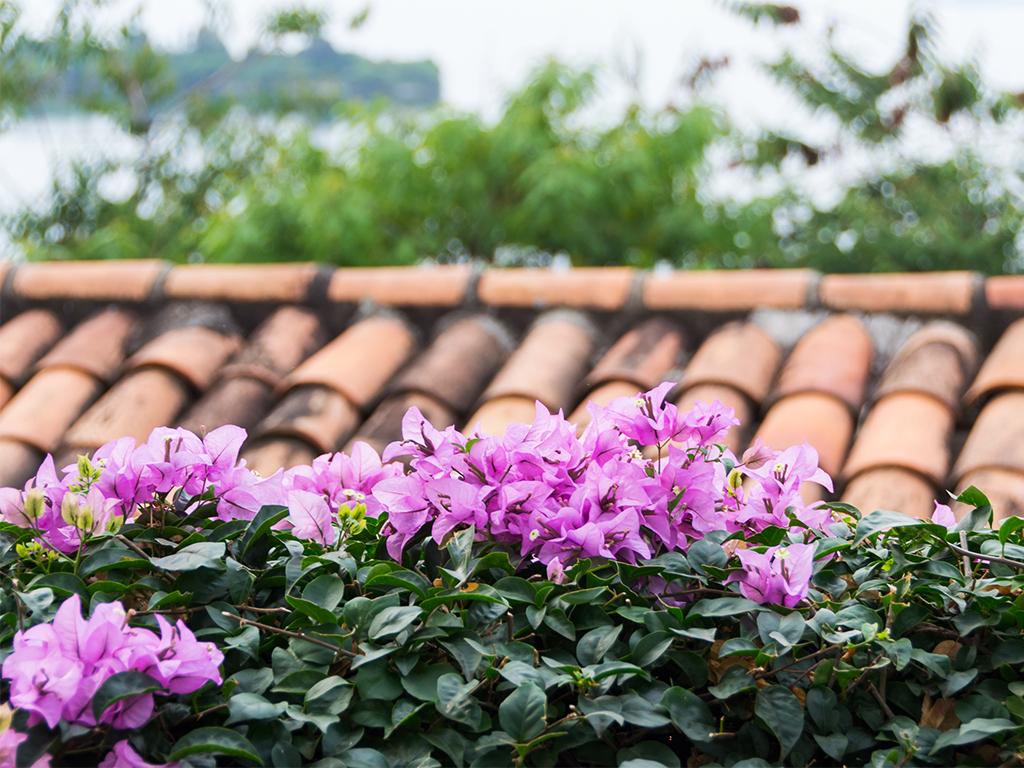 руанда-цветы-3