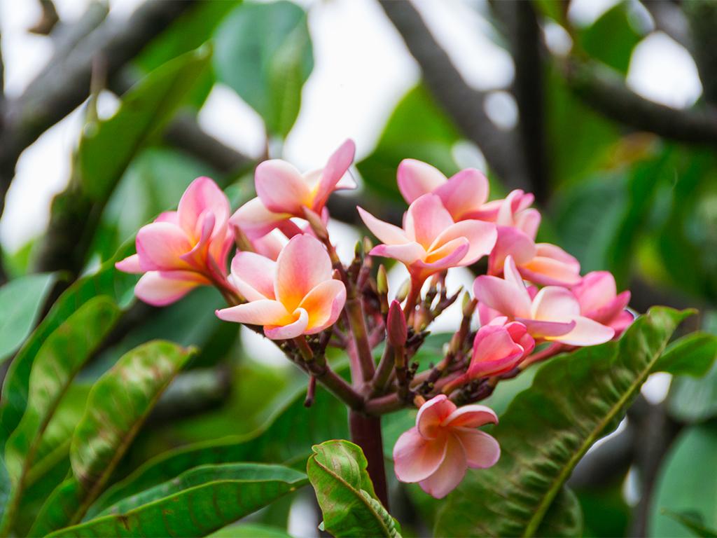 руанда-цветы-4