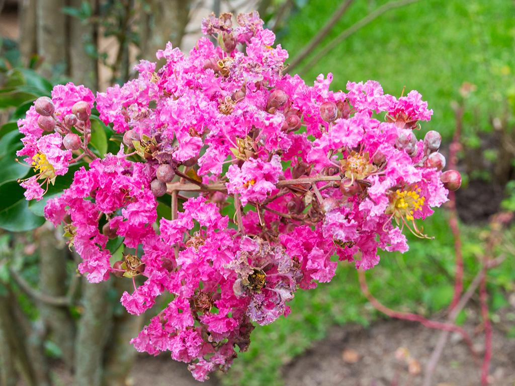 руанда-цветы-5