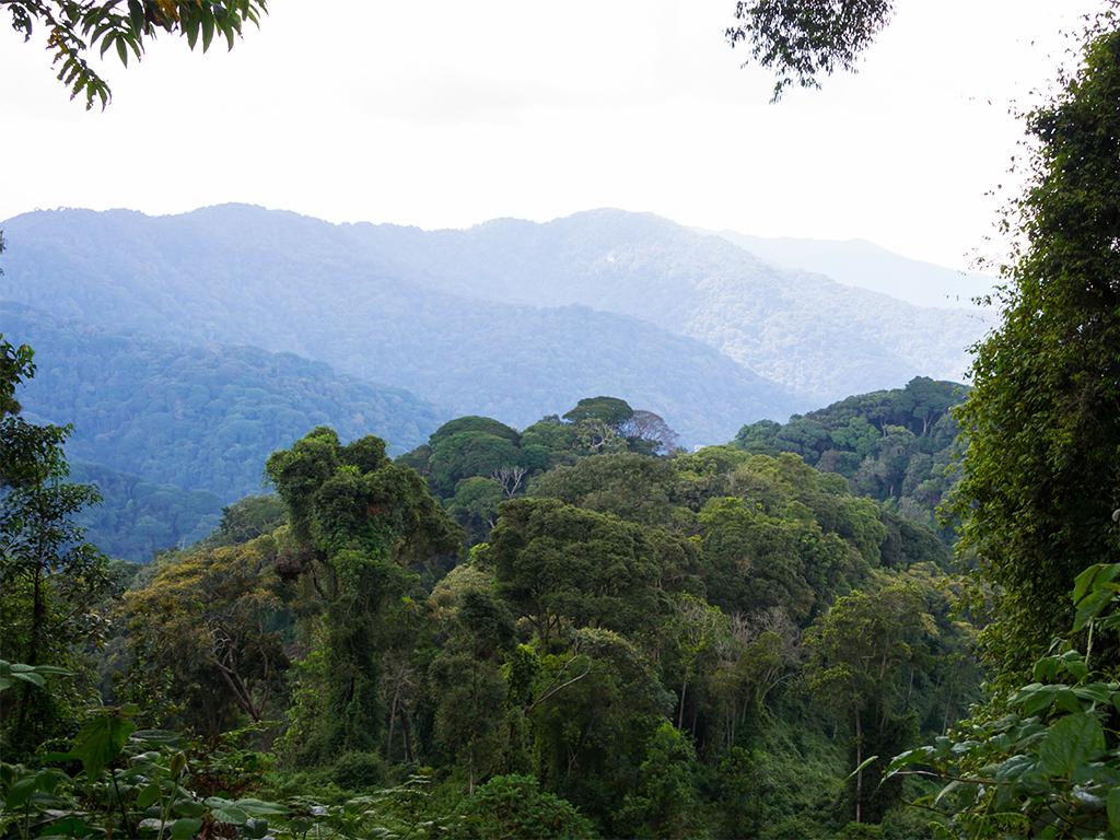 руанда-nungwe-парк-1