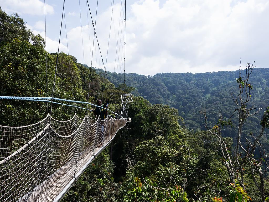 руанда-nungwe-парк-3
