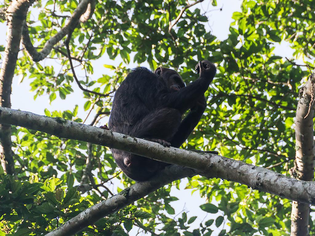 руанда-nungwe-парк-4
