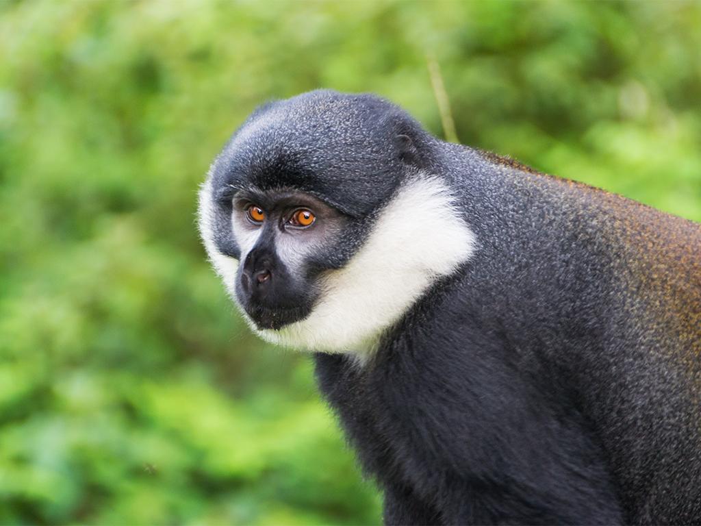 руанда-nungwe-парк-6
