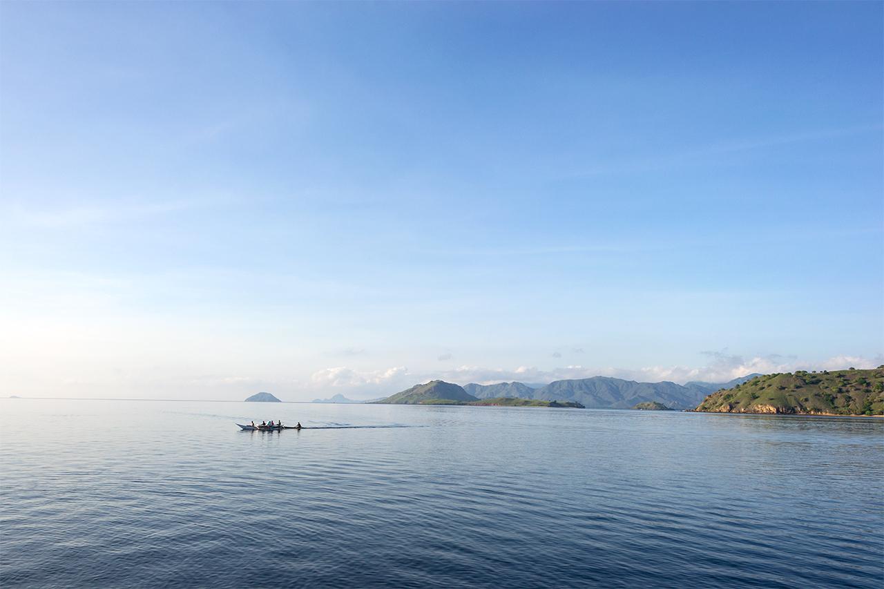 дракон-комодо-индонезия-01