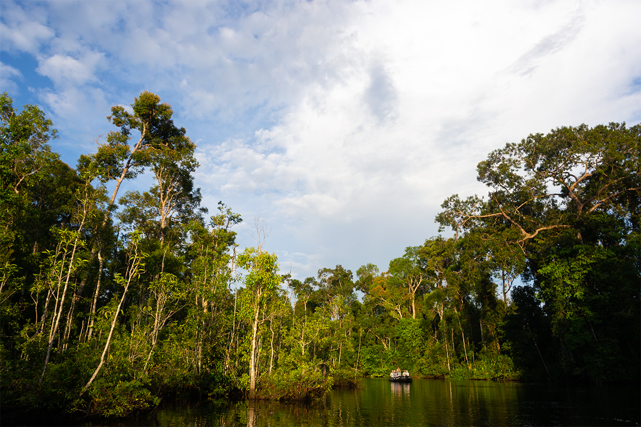 Tanjung Puting National Park Индонезия 03