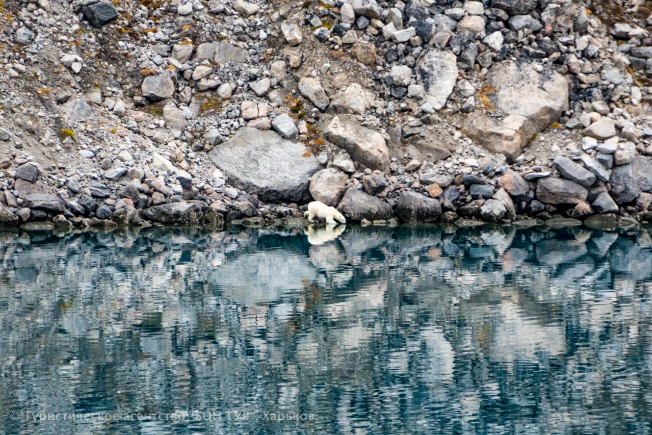 Гренландия-круиз-животные-9