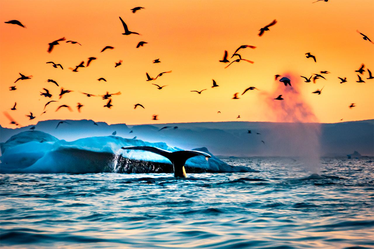 гренландия-животные-кит-1
